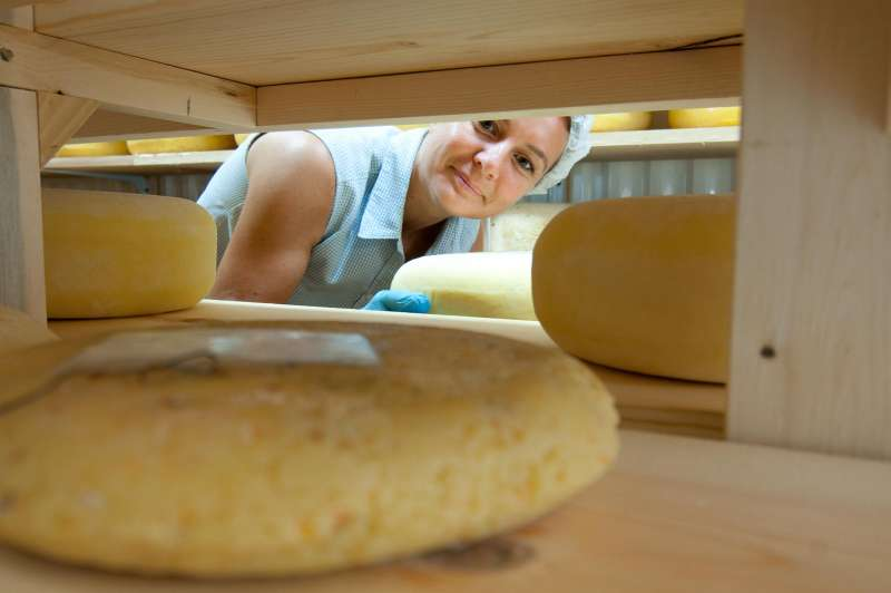 A dairy farmer inspects the aging cheese wheels.