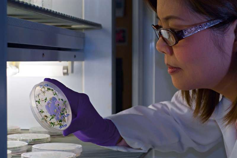 Science photography showing a lab researcher examining tree embryos in a petri dish.